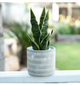 Flora Bunda Arrow Cement Pot