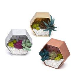 Ann Williams Mini Terrariums