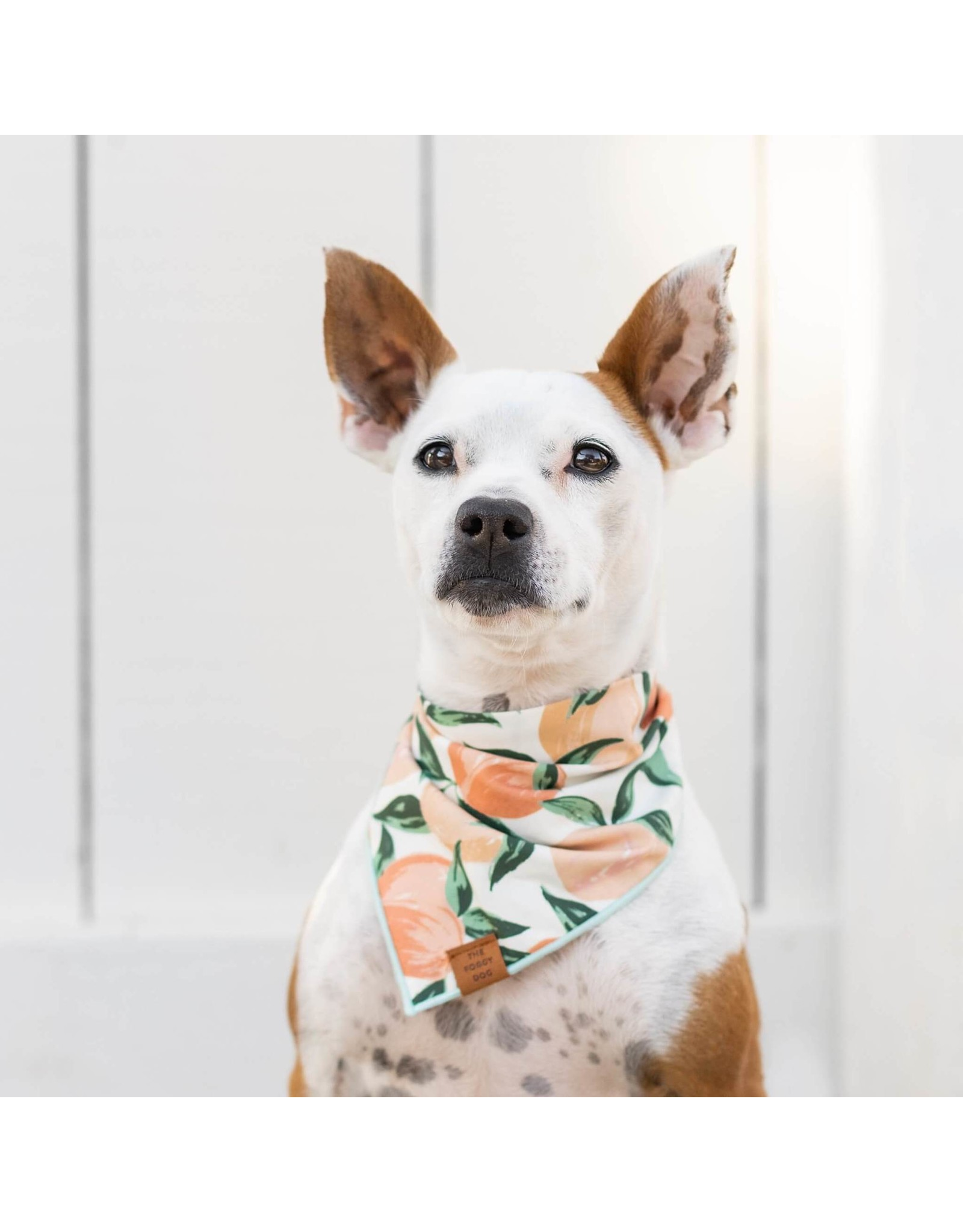 Peaches and Cream Dog Bandana