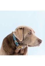 Primavera Dog Collar