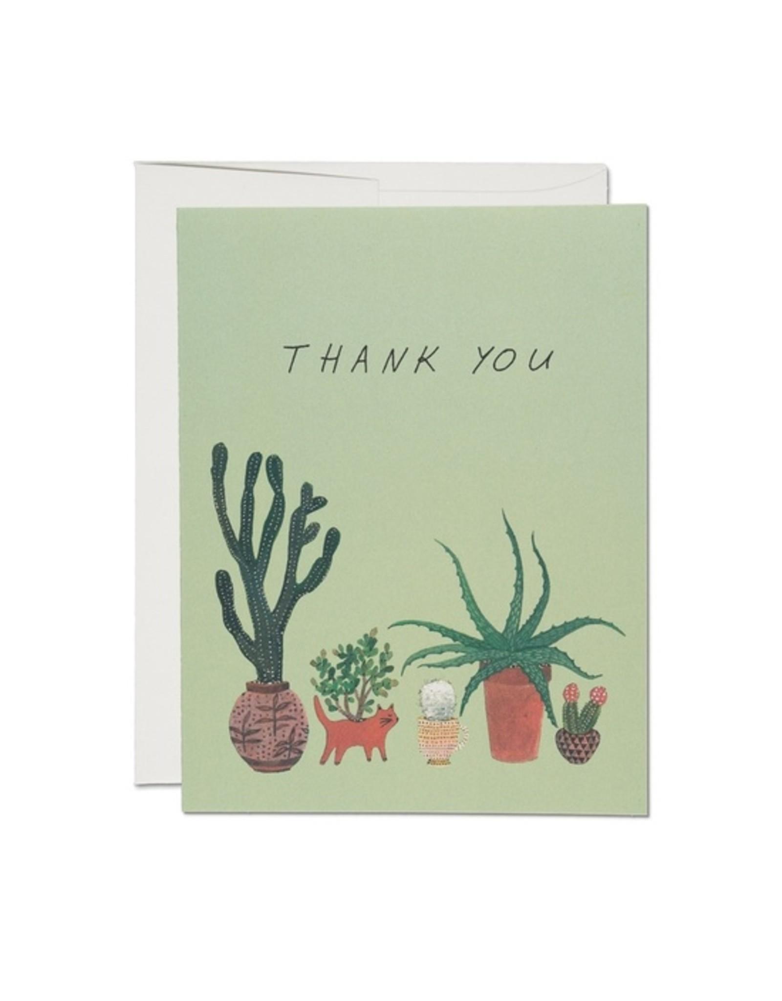 Cactus Thank You - Boxed Set