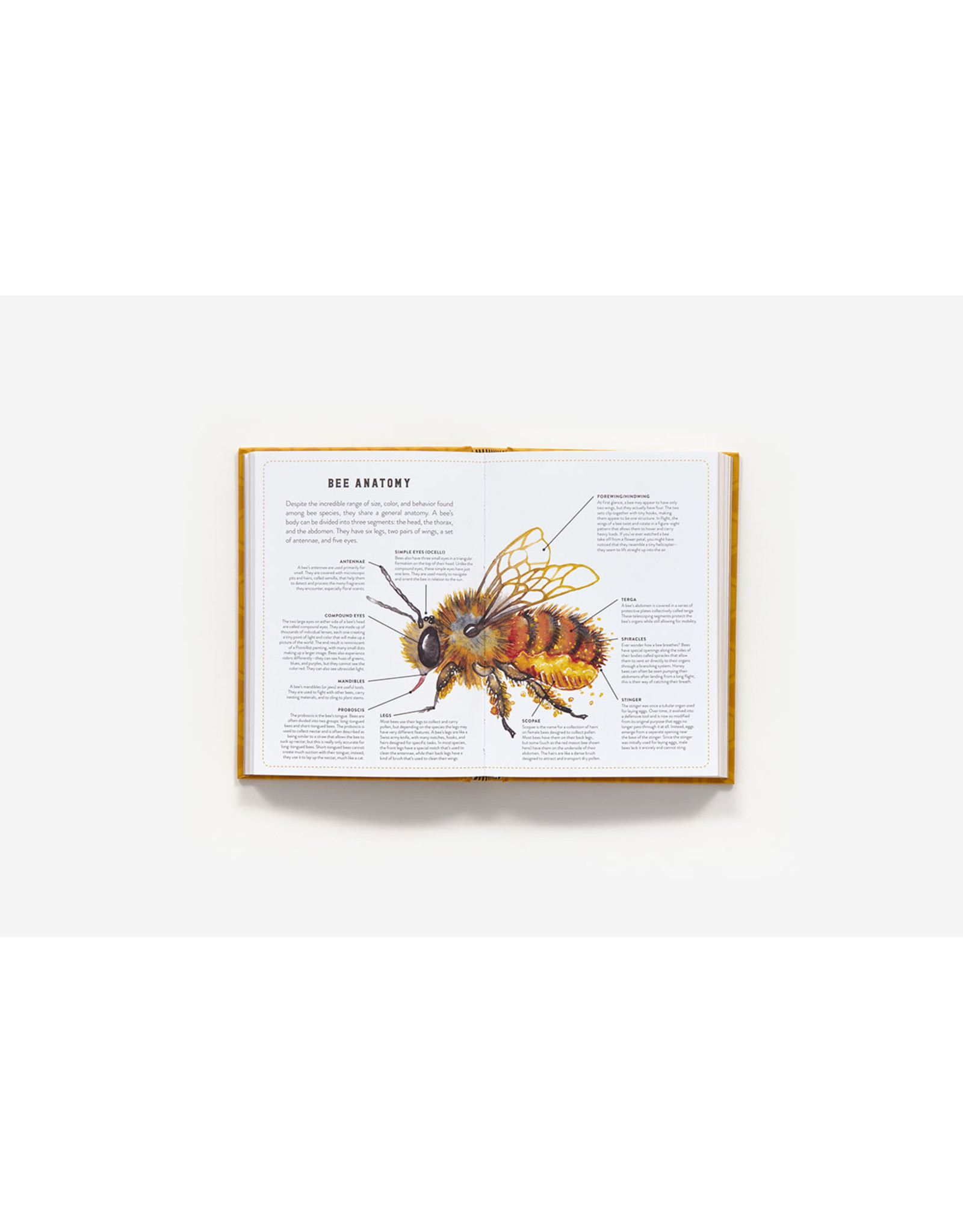 Abrams Little Book Of Bees