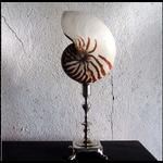 OBJET DE CURIOSITE Nautilus shell on Louis XV silver plated