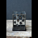 OBJET DE CURIOSITE Black amonites cuted in 2 under glass
