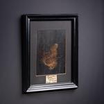 OBJET DE CURIOSITE MAMMOTH HAIR