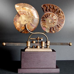 OBJET DE CURIOSITE AMMONITE ON SLIDING MACHINE