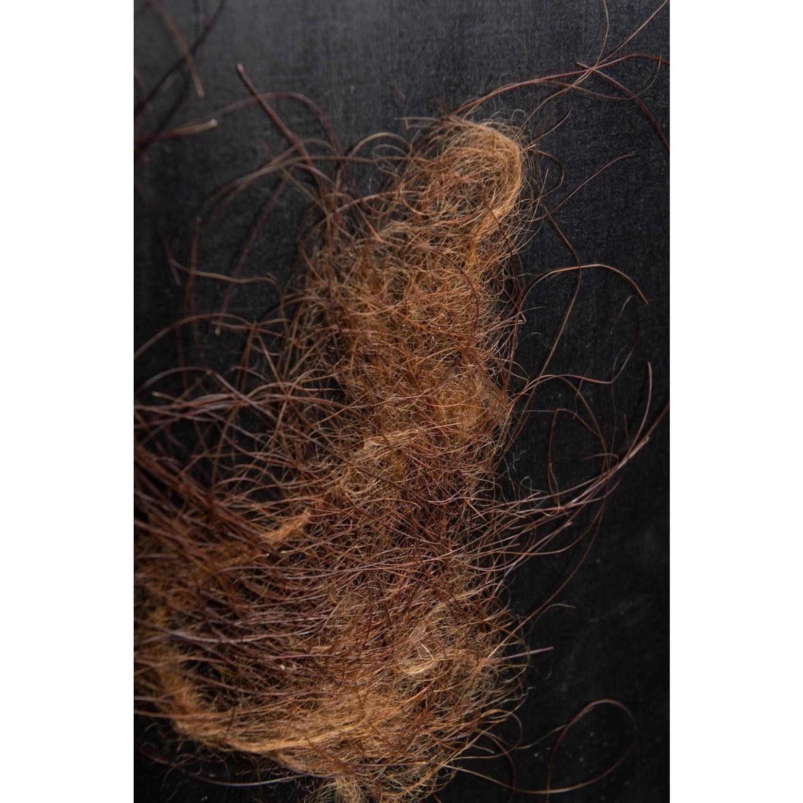 OBJET DE CURIOSITE MAMMOTH HAIR IN BLACK FRAME