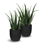 Aloe Faux Plant