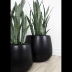 Sanseveria Faux Plant
