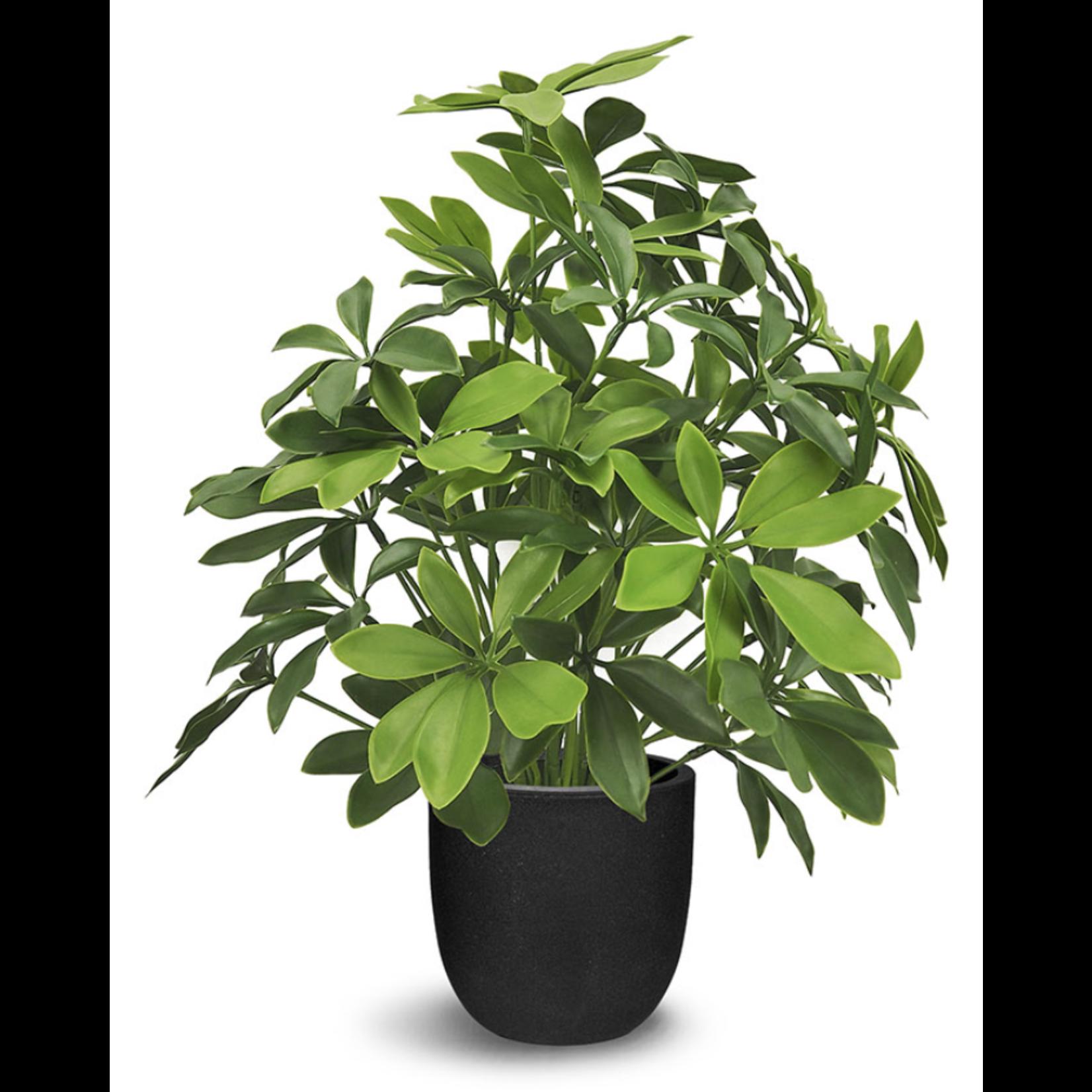 Schefflera Faux Plant
