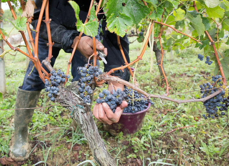 Wine By Varietal