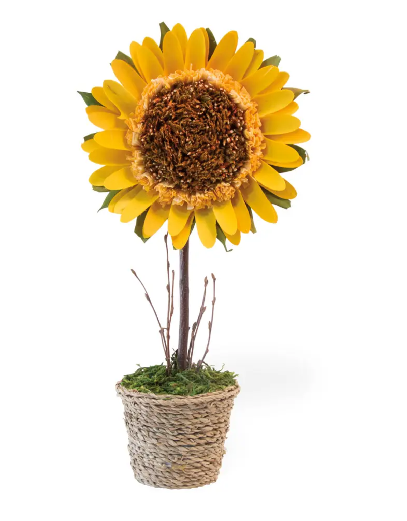 "15"" Potted Sunflower"