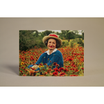 Lady Bird Lady Bird Wildflowers Postcard