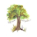 Lady Bird Oak Tree Birthday Card