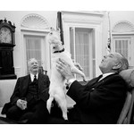Sale Sale-First Dogs:  American Presidents and Their Best Friends by Roy Rowan & Brooke Janis PB