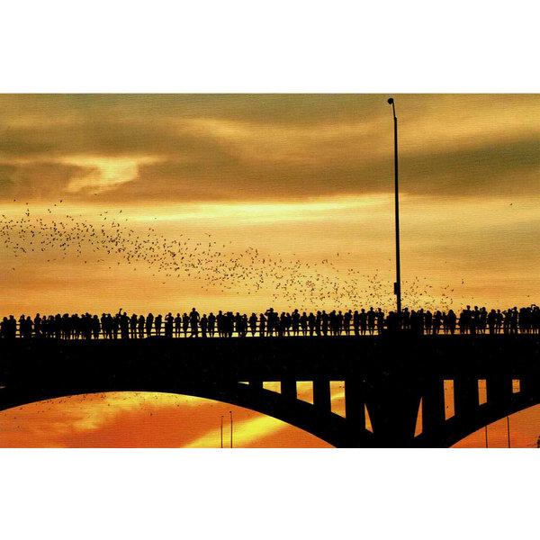 Austin & Texas Bats Postcard