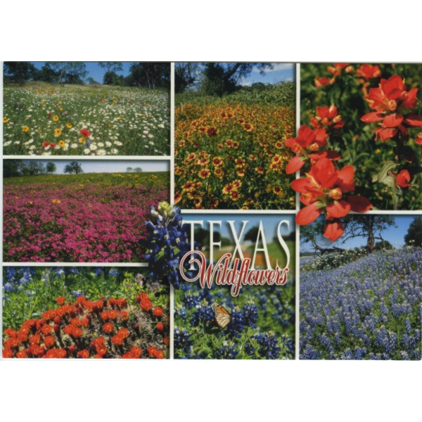 Austin & Texas Texas Wildflowers Postcard