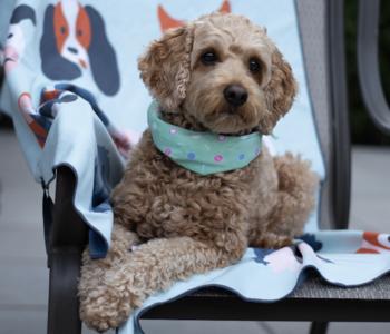 Serviette de plage Nom d'un chien