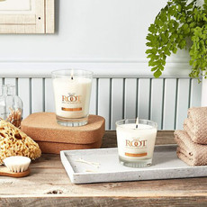 Root Chandelle Japanese Cedarwood  44Hrs Root