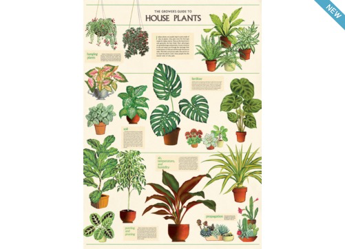 Poster/Giftwrap - Houseplants