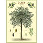 Poster/Giftwrap - Olive Tree#
