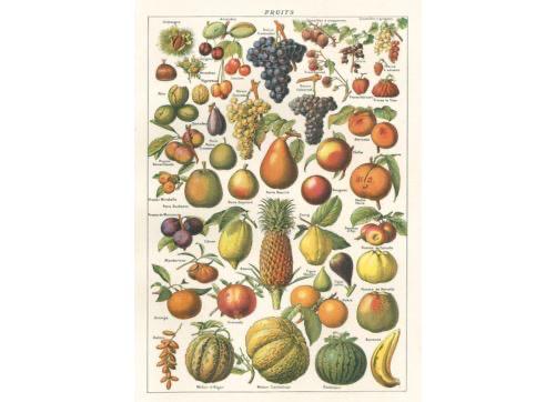 Giftwrap - Fruit