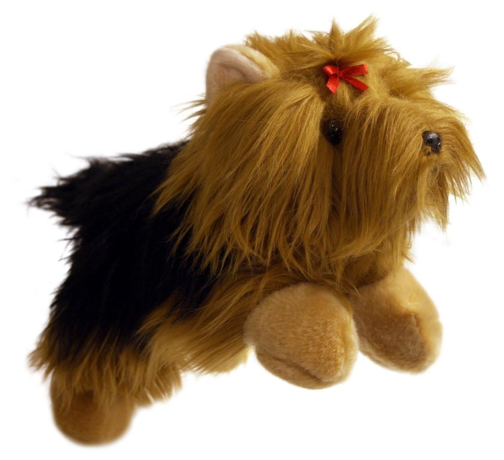 Yorkshire Terrier - Full Bodie