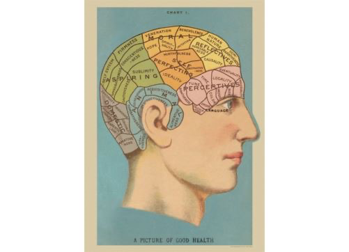 Poster/Wrap Phrenology