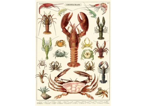 Poster/Wrap - Crustaceans
