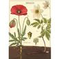 Giftwrap Botany