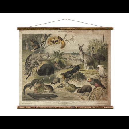Australian Fauna Chart