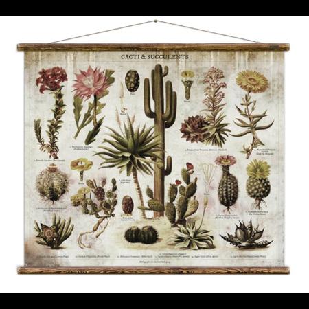 Cacti & Succulents Chart