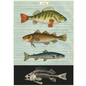 POSTER-WRAP FISH