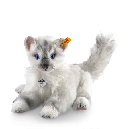 Chari cat, white