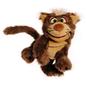 Kater Kolman Cat