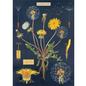Poster/Wrap - Dandelion Chart