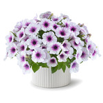 Jolly Farmer Capella Purple Veins Petunia