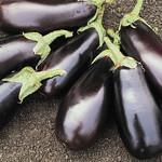 Jolly Farmer Classic Eggplant