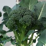 Jolly Farmer Diplomat Broccoli