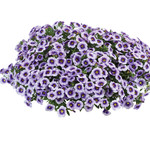 Jolly Farmer Eyeconic Purple Calibrachoa