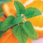 Jolly Farmer Mandarina Orange Balm