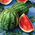 Vesey Seeds Shiny Boy Watermelon