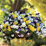 Jolly Farmer Cool Wave Mix Pansy