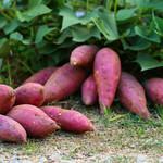 Paridon Edible Sweet Potato's