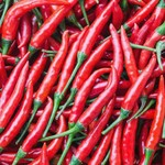 Vesey Seeds Cayenne Pepper