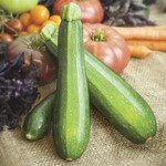 Vesey Seeds Endeavour Zucchini Squash