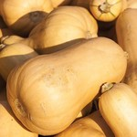 Vesey Seeds Early Butternut Squash