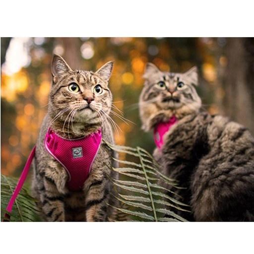 RC Pet RC Pet Adventure Kitty Harness