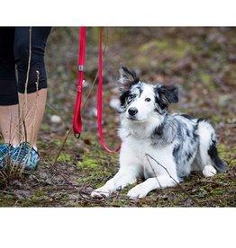 RC Pet RC Pet Primary Dog Leash