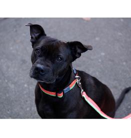 RC Pet RC Pets Clip Collar
